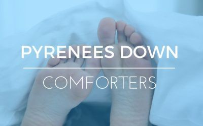 What is Pyrenees Down? Do You Want It In Your Comforter?