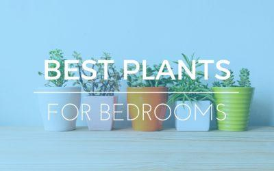Best Bedroom Plants – 5 Best Artificial and Minimal Care Plants