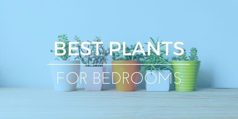 BEST PLANTS FOR BEDROOMS