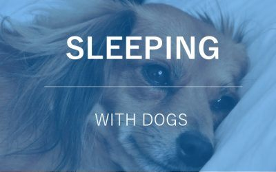 Sleeping with a Dog