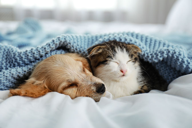 best sheets for cat hair